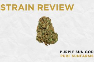 Legal Cannabis Strain Review: Purple Sun God by Pure Sunfarms