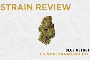 Legal Cannabis Strain Review: Blue Velvet by Edison Cannabis Co.