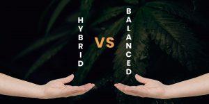 Hybrid vs. Balanced Cannabis