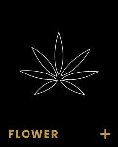 Buy Legal Weed at The Hunny Pot