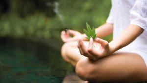 Cannabis and Meditation