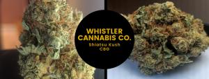 CBG Shiatsu Kush by Whistler Cannabis Co