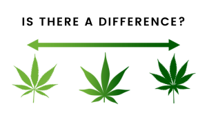 What is the difference between indica and sativa cannabis?