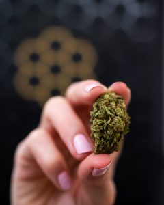 Buy Legal Cannabis From The Hunny Pot Cannabis Dispensaries