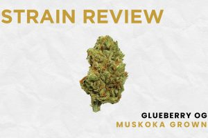 Glueberry OG - Muskoka Grown
