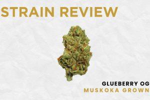 Glueberry OG - Muskoka Grown