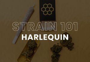 Cannabis Strain Harlequin