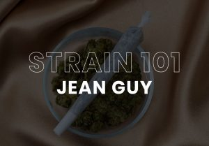 Cannabis Strain Jean Guy
