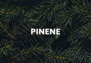 pinene cannabis terpene