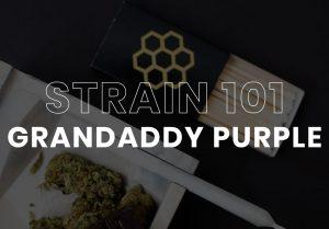 Grandaddy Purple Cannabis