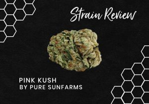 Pink Kush Strain Review
