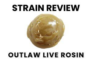 Hunny Pot Strain Review